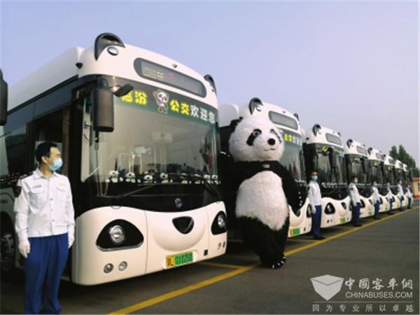 """有颜又有""""料"""" 申龙""""熊猫""""新能源公交上岗山西临汾"""